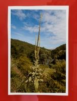 87_mg99171-crop-04.jpg